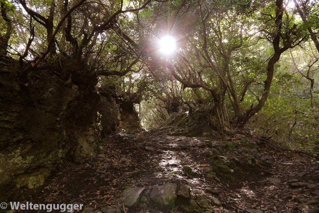 Der verwunschene Wald