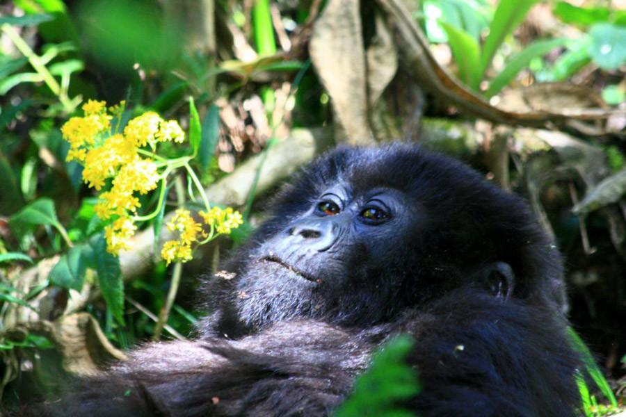 Ruanda-12